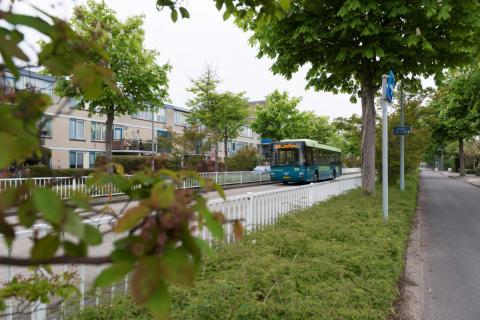 busbaan in Overbos (foto: Margo Oosterveen)